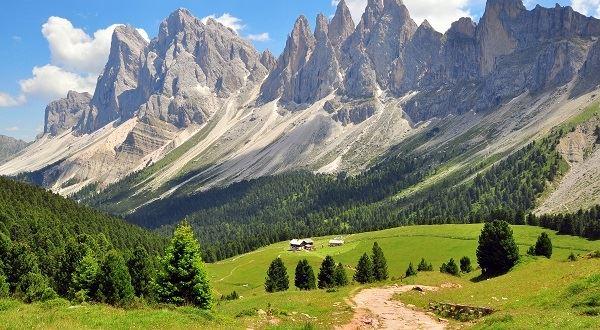 Alpine Bear Trek
