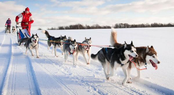 Finnish Dogsledding Adventure
