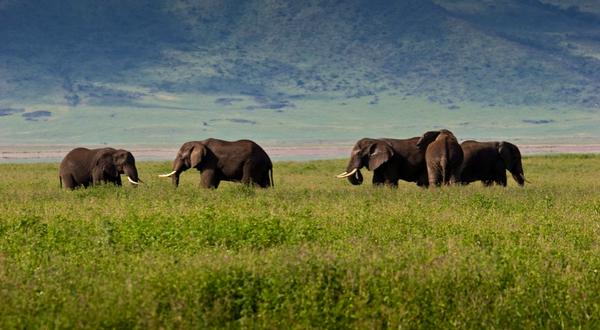 Kilimanjaro Lemosho Route & Safari