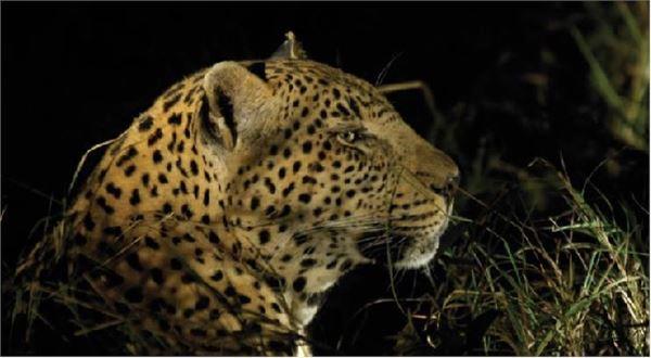 Kruger Experience - Lodge (3 days) UBAI