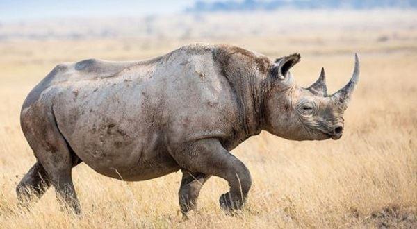 Rhino Budget Camping in Tanzania