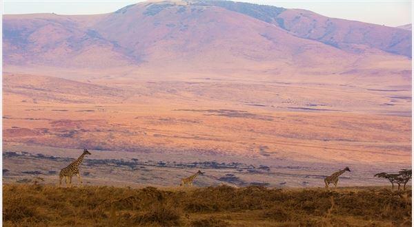 Tanzania - Amboseli, Ngorongoro, Serengeti, Manyara & Tarangire