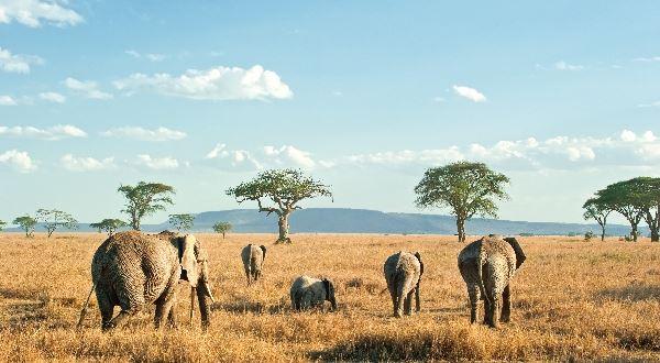 Tanzania - Ngorongoro, Serengeti, Manyara & Tarangire